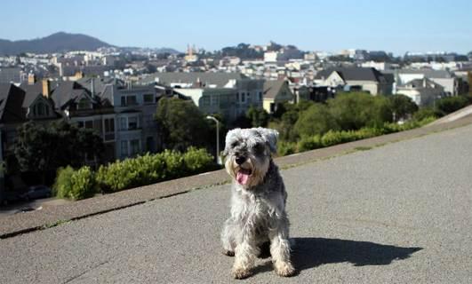 Hobie at Alta Plaza park
