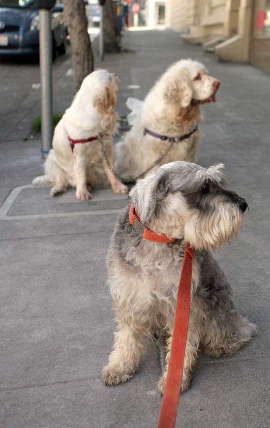 Hobie waits outside a bakery