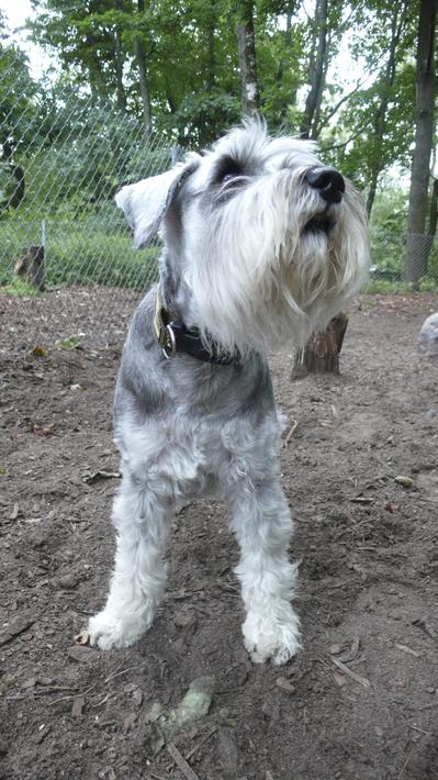 Lapinlahti_dog_park_closeup.jpg
