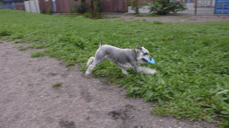 Ruoholahti_dog_park_action.jpg