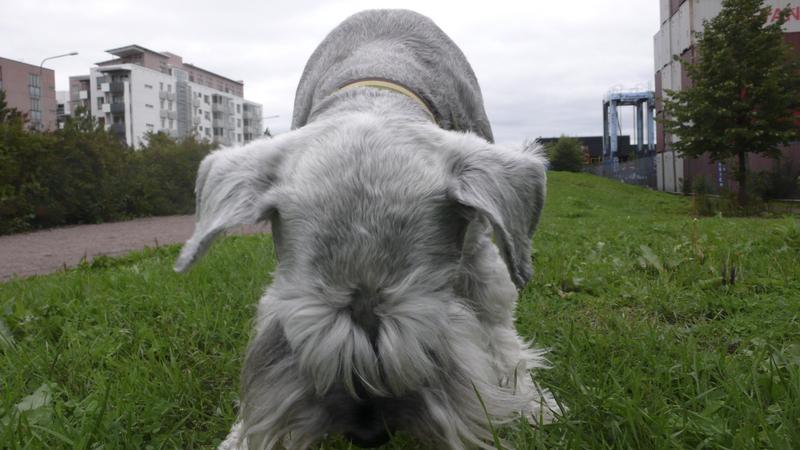 Ruoholahti_dog_park_closeup.jpg