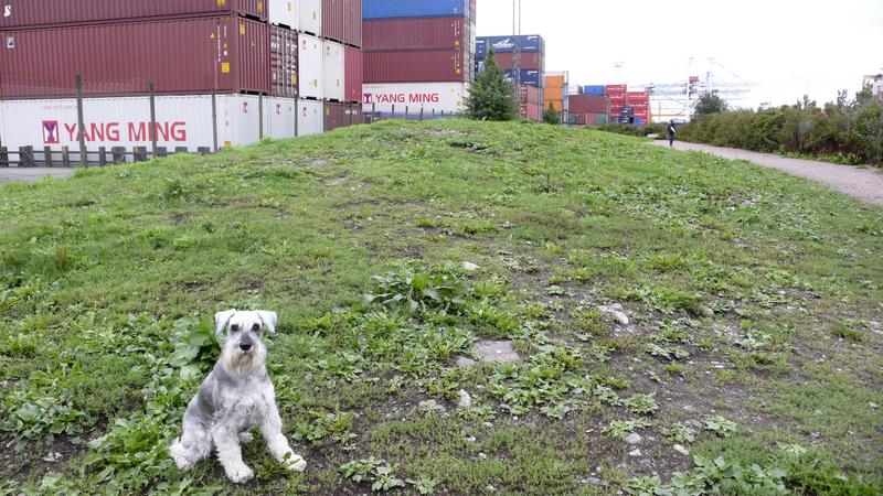 Ruoholahti_dog_park_overview.jpg
