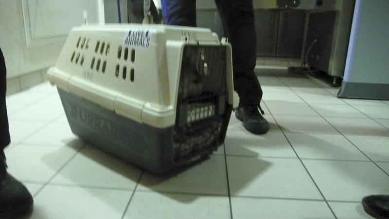 hobie-crate-3.jpg