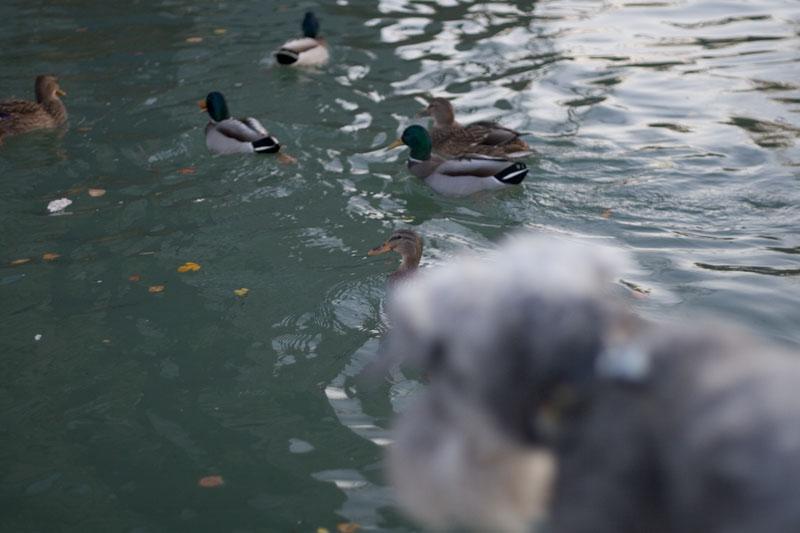 duckhunt.jpg
